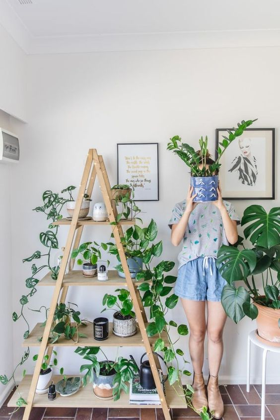 Aesthetic Indoor Plant Stand Ideas According to Pinterest